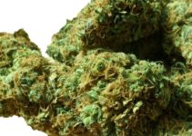 Top 30 Best Sativa Strains
